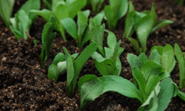 whats-new-stevia2